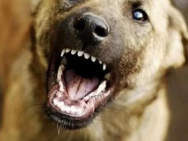Abşeronda it dişləyən 53 yaşlı kişi öldü