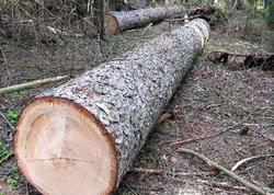 Qanunsuz yolla əldə edilmiş meşə materialı aşkar edildi