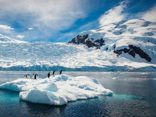 Türk alimlər Antarktidada elmi araşdırmalar aparacaqlar