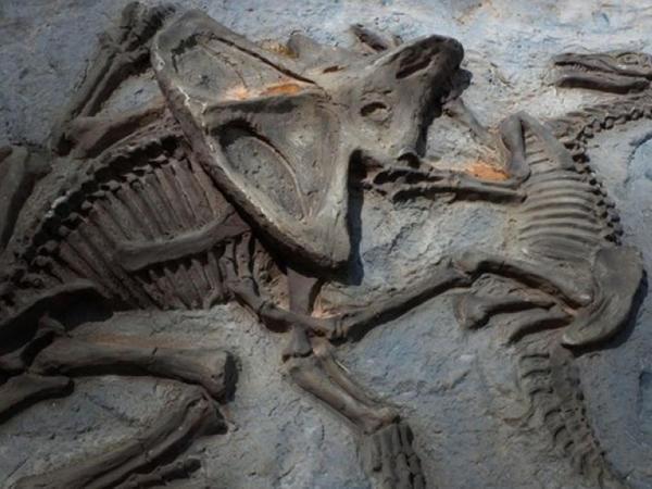 Dinozavrda xərçəng tapıldı - ARAŞDIRMA
