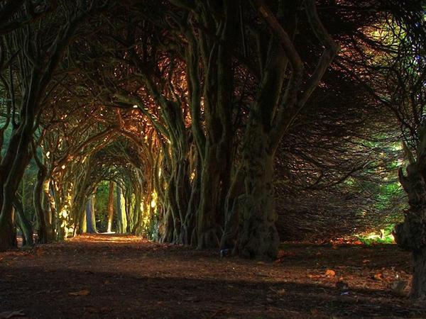 Dünyanın qeyri-adi ağacları - FOTO