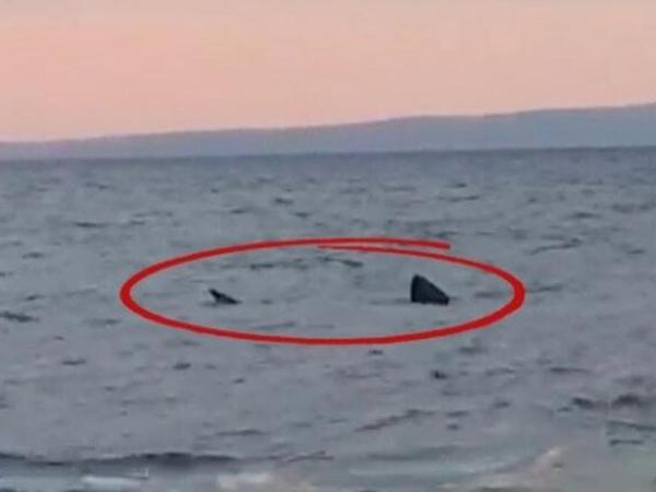 Türkiyə sahillərində ŞOK: Balıqçılar qaraltı gördü - Yaxınlaşanda... - VİDEO