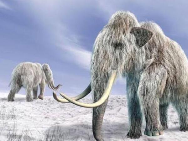 """Heyvanlar buz dövründə necə sağ qaldı? - <span class=""""color_red"""">Maraqlı faktlar</span>"""