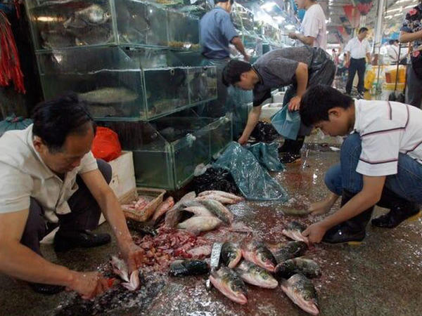 Çindəki bazardan dünyaya yayılan virusla bağlı dəhşətli detallar ÜZƏ ÇIXDI - ŞOK FOTOLAR