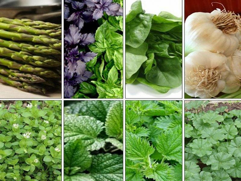 Yaz bitkiləri və onların müalicəvi keyfiyyətləri