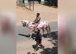 Atın üstünə koronavirusun rəsmini çəkib küçələri gəzdi