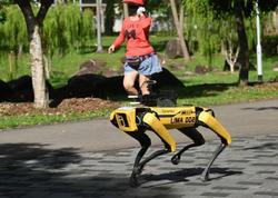 Bu ölkədə karantinə riayət olunmasına robot-itlər nəzarət edir - FOTO