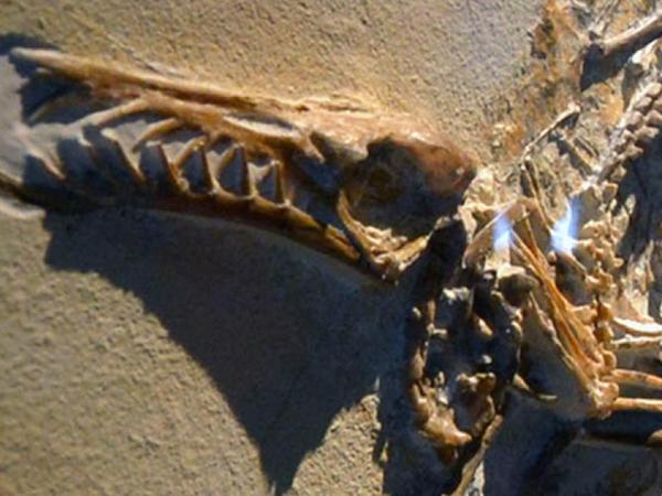Həvəskar arxeoloq qədim pterozavrın qalıqlarını aşkarladı