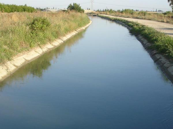 Bərdədə su kanalına atılan heyvan leşləri məhv edilib