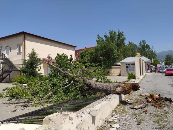 Şəkidə güclü külək ağacı və məktəbin hasarını aşırdı - FOTO