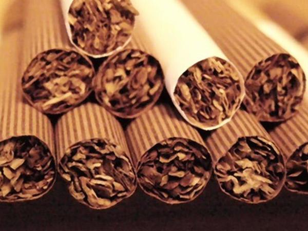 Azərbaycan tütün nümunələri Braziliya və Almaniyaya göndərilib