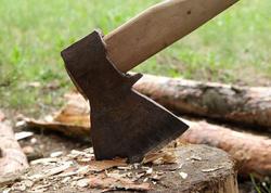 Qanunsuz ağac kəsintisi ilə bağlı cinayət işi açıldı