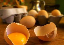Dünyanın ən kiçik yumurta qalığı tapıldı