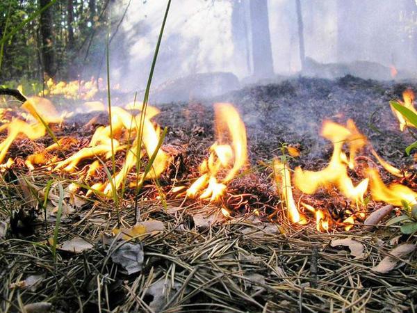 Nazirlik: Meşələrdə yanğın halları azalıb