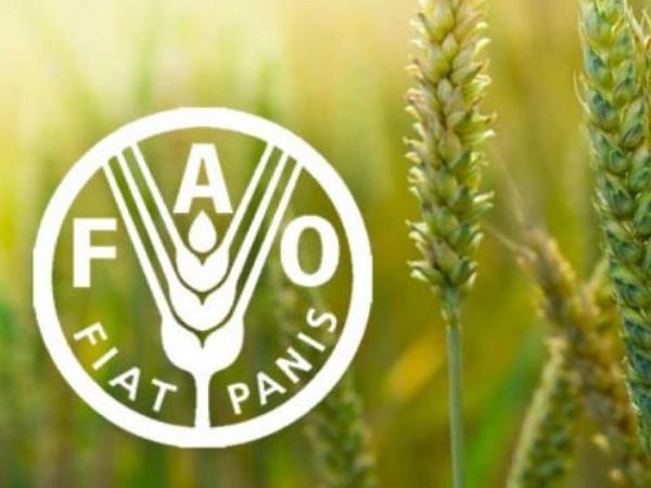 FAO: Qlobal ərzaq məhsullarının qiymətləri iyun ayında artıb