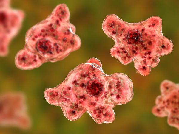 Koronavirus bitməmiş beyin yeyən parazit ortaya çıxdı