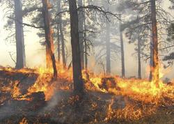 Yaponiyada yanğın 77 hektar meşə zolağını məhv etdi