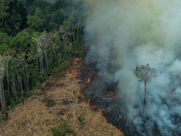 Braziliyanın Amazon meşələrindəki yanğınlar artıb