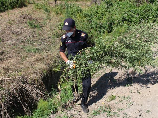 3 tondan artıq narkotik məhv edildi - FOTO