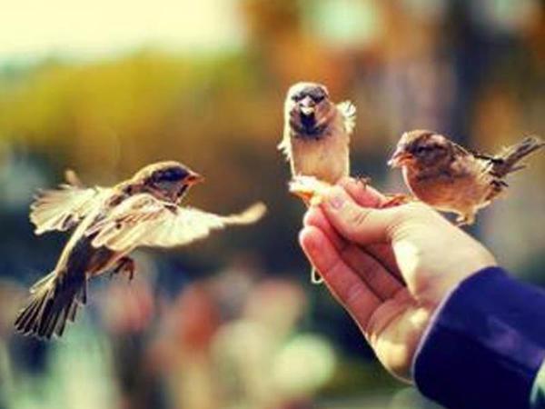 İnsanları yaxşılıqlara dəvət edən şəxs bu keyfiyyətlərə malik olmalıdır