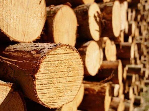 İndiyə qədər 35 000 kubmetr oduncaq tədarük olunub