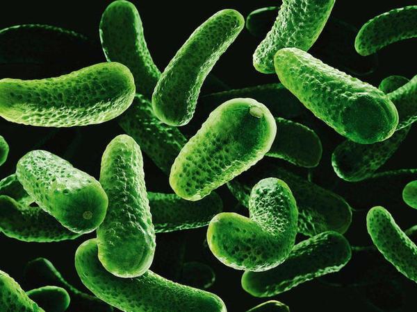 Bakteriemiya nədir?