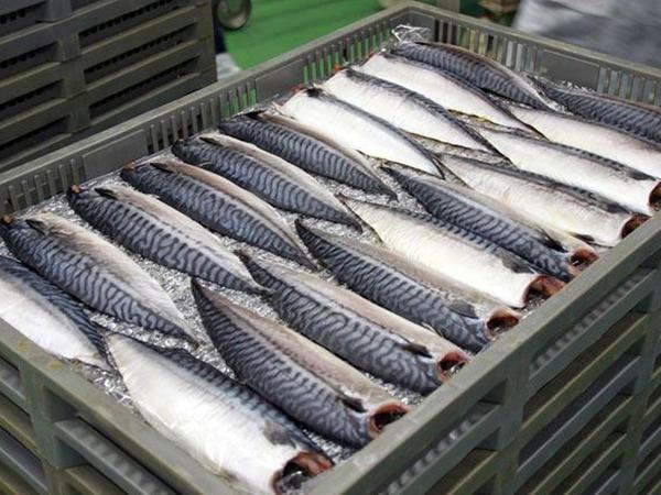 """Azərbaycanın balıqçılıq sektorunda əhəmiyyətli irəliləyiş var - <span class=""""color_red"""">FAO</span>"""