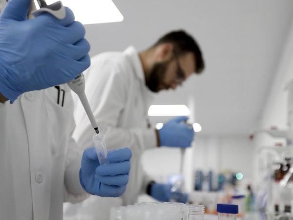 Bioloqlar: Köhnə dünyadakı meymunlar koronavirusa qarşı davamsızdır