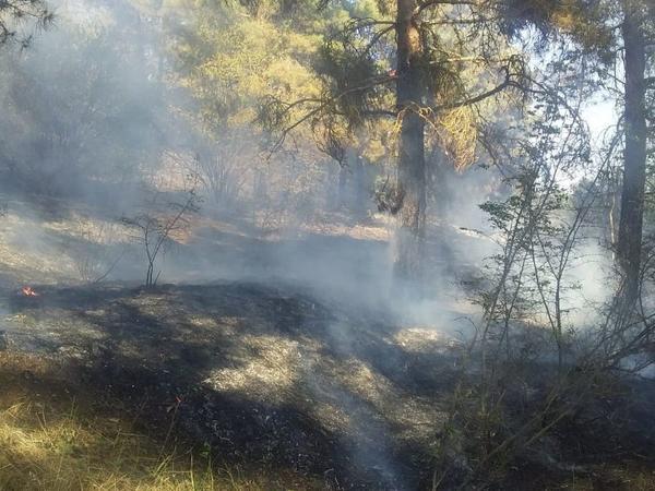 Ermənistanın artilleriya atəşləri nəticəsində Goranboyda meşədə başlayan yanğın söndürülüb