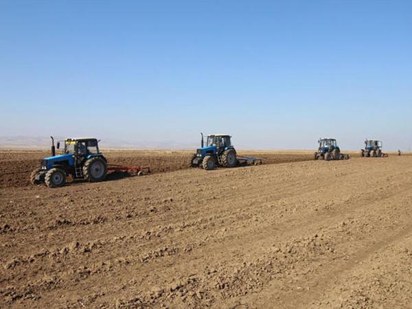 700 minə hektara yaxın sahədə payızlıq taxıl səpini həyata keçirilib