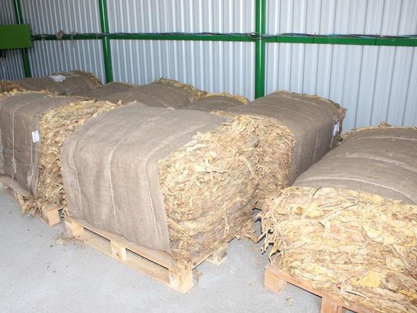 6240 ton tütün yığılıb