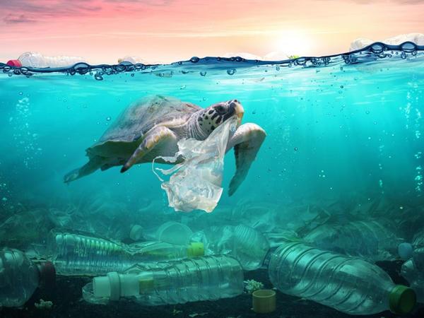 On dörd dövlətdən ibarət qrup dayanıqlı okean iqtisadiyyatını qurmağı öhdəsinə götürür
