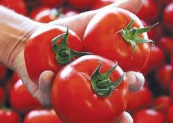 """&quot;Azərbaycan pomidorlarının Avropa İttifaqına ixracı mümkündür&quot; - <span class=""""color_red"""">Kestutis Yankauskas</span>"""