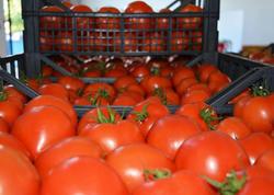 Azərbaycan Qazaxıstana pomidor ixracını kəskin artırıb