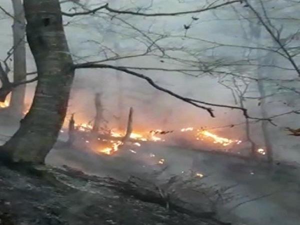 Hirkan Milli Parkındakı yanğın nəticəsində dəyən zərər hesablanır - Xidmət rəisi