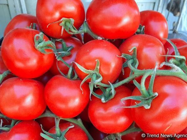 Qazaxıstan Azərbaycandan pomidor idxalını dayandırıb