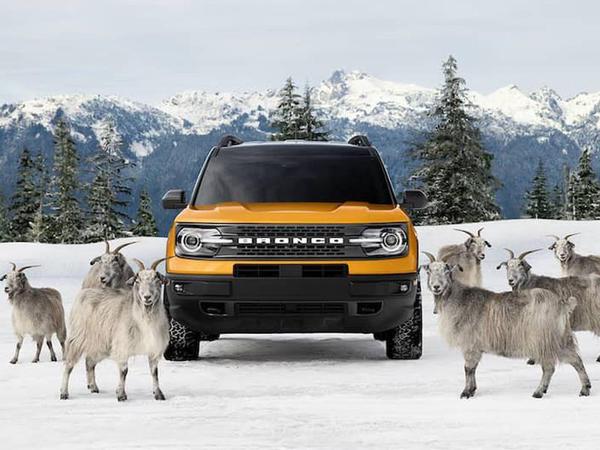 Ford Bronco Sport modelinin reklam çarxında dağ keçiləri çəkilib - VİDEO - FOTO
