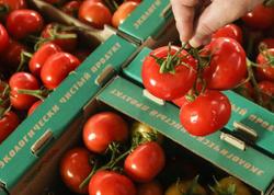 Sabah Rusiya ilə Azərbaycan pomidor idxalı məsələsini müzakirə edəcək