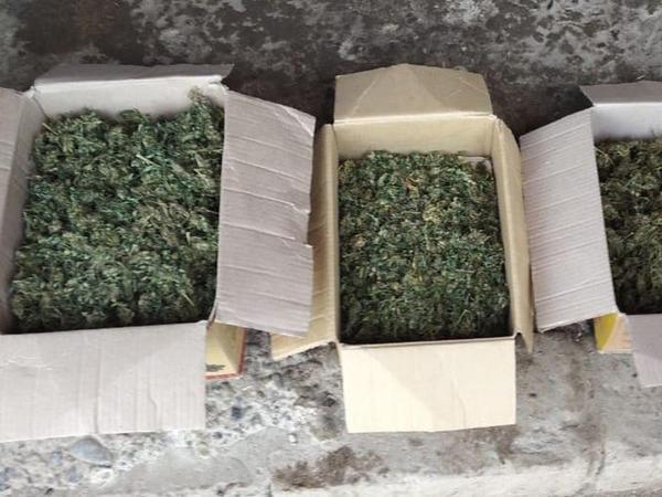 Həyətindən 3 kiloqramdan artıq narkotik tapıldı - FOTO