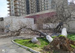 Bakıda daha bir məktəbin damı uçdu - FOTO