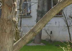 """Çoxillik ağaclar bina sakinlərinə təhlükə yaradır - <span class=""""color_red"""">VİDEO</span>"""