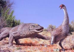 Avstraliya meqafaunasının yoxa çıxmasına dair hipotez təkzib edilib