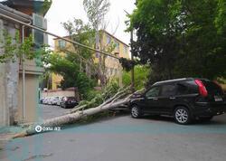 Bakıda güclü külək ağacı maşının üzərinə aşırdı - FOTO
