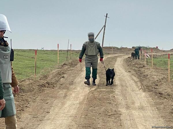 Bir həftədə 93 hektara yaxın ərazi minadan təmizlənib