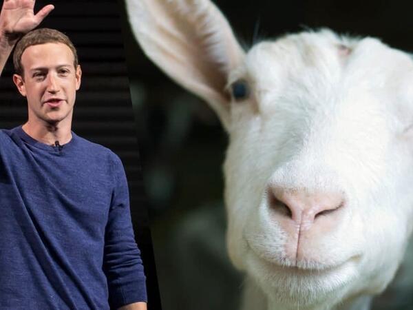 Mark Zukerberq keçilərinin FOTOsunu paylaşdı