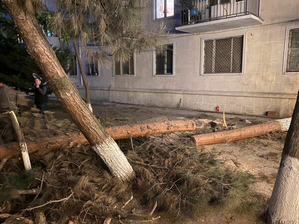 Sumqayıtda gecə ağacları kəsənlər cəzalandırıldı - FOTO