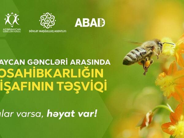 Aztəminatlı gənclər üçün arıçılıq təsərrüfatı yaradılacaq - FOTO