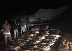 Nərə balıqlarını qanunsuz ovlayan dəstə saxlanıldı - FOTO