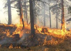12 ayland ağacı yandı, təbiətə 2 880 manat ziyan dəydi