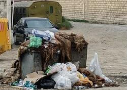 Qurban bayramından sonra ürəkbulandıran mənzərə - FOTO